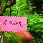pear wish