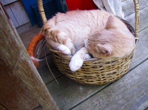 cat in a basket.